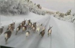 Görüntüler İsveç'ten o şoför dava edildi