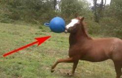 Oynamaya doyamayan bu at bir başka