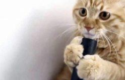 İlk Kez Elektrik Süpürgesiyle Tanışan Kedinin Verdiği Tepki İzleyenleri Güldürdü