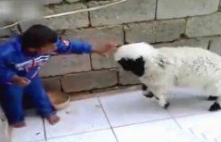 Kuzu ile Çocuğun Hesaplaşması