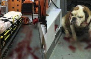 İsveç'te köpek dehşeti: bir kişi öldü