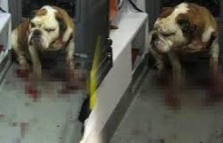 İsveçli genci öldüren köpek infaz edildi