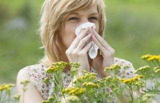 İsveç'te bu ilkbahar polen artacak