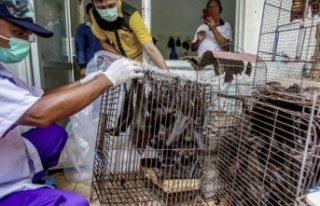 DSÖ: Salgın riskine rağmen canlı hayvan pazarlarının...