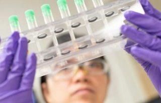 DSÖ: Covid-19 aşısının ülkelere dağılacağı...