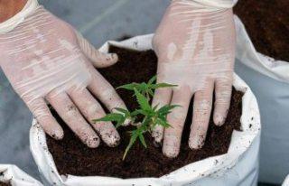 BM esrarı, eroin gibi narkotik maddeler listesinden...
