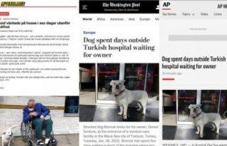 Sahibini günlerce hastane kapısında bekleyen köpek,...