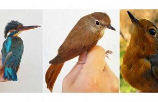 """İsveçli bilim insanlarından kuşların """"merkezi..."""