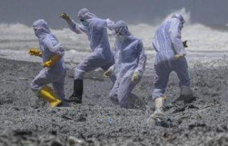 Kargo gemisi yangını sonrası çevre felaketi: Tonlarca...