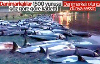 Danimarka'da yüzlerce yunus festivalde öldürüldü