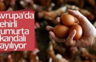 Avrupa'da böcek ilaçlı yumurta sıkandalı...