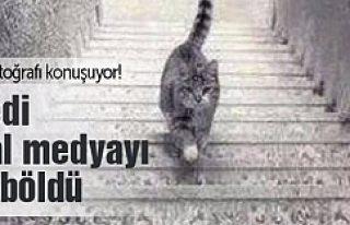 Bu kedi sosyal medyayı ikiye böldü!
