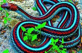 Buda oldu: Blocket'te  yılan satışı...