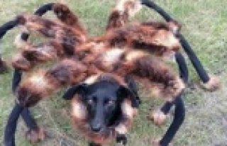 Dev örümcek şakası, 2014'ün en fazla izlenen...