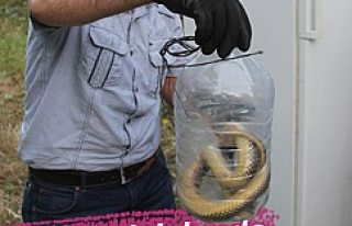 Dev yılan buzdolabına girdi