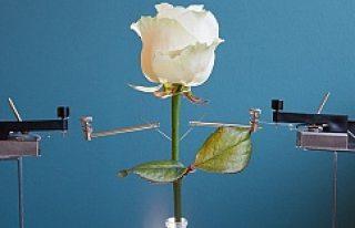 Dünyanın ilk elektronik bitkisini İsveçliler üretti