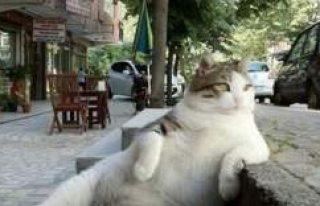 Efsane kedi Tombili'nin heykeli çalındı