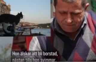 İsveç devlet televizyonu SVT'de İsveççe...
