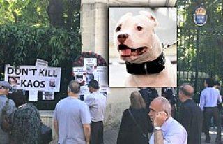 İsveç Polisine, İstanbul'da şok Köpek Protestosu