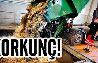 İsveç'te atık yiyecekler korkunç boyuta ulaştı!