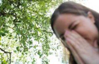 İsveç'te polen alerjisi olanlar için bu sene...