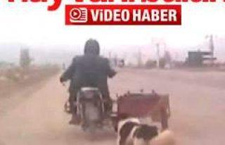 Köpeği motorun arkasına bağlayıp eziyet etti