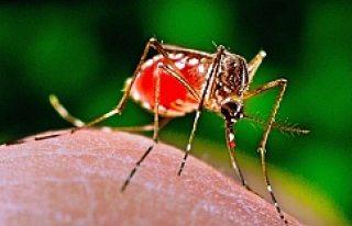 Norveç ve İsveç'te Zika virüsüne rastlandı