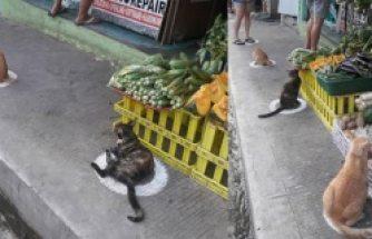Sosyal mesafe kurallarına uyan hayvanlar viral oldu!