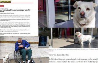 6 gün hastane kapısında sahibini bekleyen Vefalı köpek Boncuk İsveç basınında
