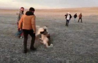 Kulu'da köpek dövüştüren 5 kişiye 39 bin 931 lira ceza