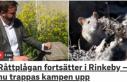 Rinkeby'i fareler bastı
