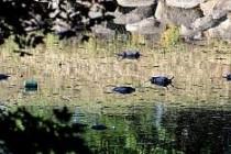İsveç'i ölü fareler kapladı