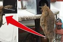 İsveç'te evde yakalanan dev fare tam 40 santimetre