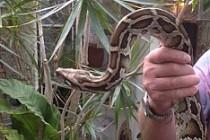 Malmö'de bir eve giren dev yılan yakalandı