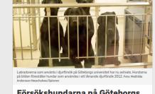 İsveç'te bir deney için dişleri çekilen köpekler öldürüldü