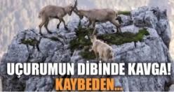 Keçiler, İsveç sınırında bulunan Cingino bariyerinde...