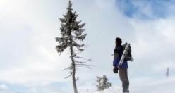 Dünyanın en yaşlı ağacının İsveç'te olduğunu biliyor muydunuz?