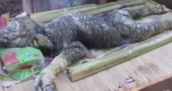 Bufalo timsah doğurdu dünya şok oldu