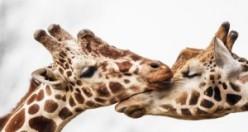 İnsanlardan daha samimiler: İşte hayvanlar aleminden sevgi dolu fotoğraflar