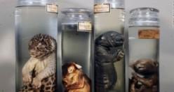 İşte Dünyanın en korkutucu tıp müzeleri