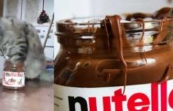 Kedi Nutella kapağını açık bulunca