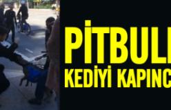 Pitbull'un kediye işkencesi!
