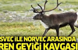 İsveç ile Norveç Ren geyiği kavgası