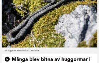 İsveç'te Nisan ayında bir çok kişiyi yılan...