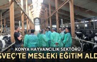 Konya hayvancılık sektörü İsveç'te mesleki...