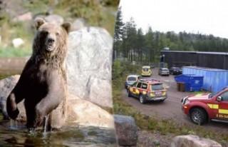 İsveç'te ayının öldürdüğü bakıcı olayıyla...