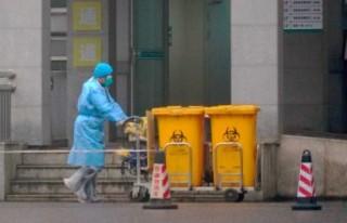Virüsten sonra Çin'de kedi köpek eti yasaklandı