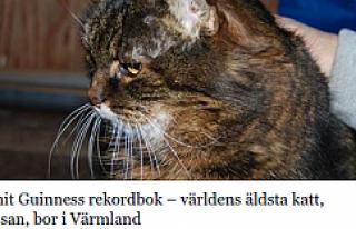 Dünyanın en yaşlı kedisi İsveç'te yaşıyor...