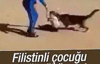 İsrailli gençler köpeği Filistinli çocuğa saldırttı