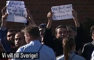 İsveç'e bu yıl gelen sığınmacı sayısı...